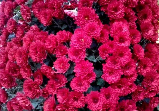 fleurs de commémoration 5