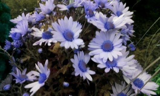 fleurs de commémoration