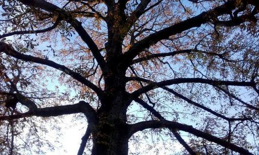 arbre à l'automne