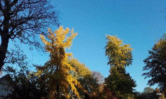 ciel bleu à l'automne