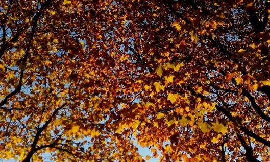 or dans les arbres
