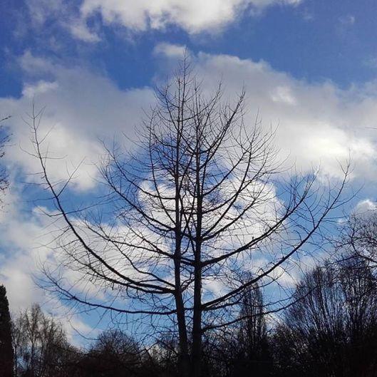 arbre de mon parc en hiver sans feuille