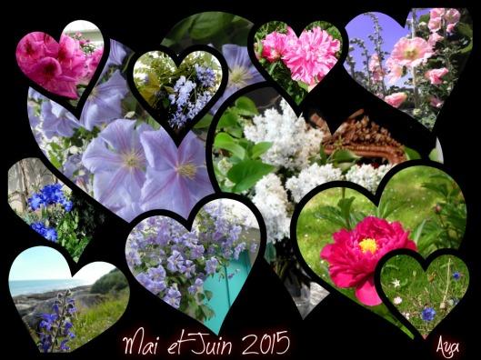 Flower Power 2015 mai et juin 2015
