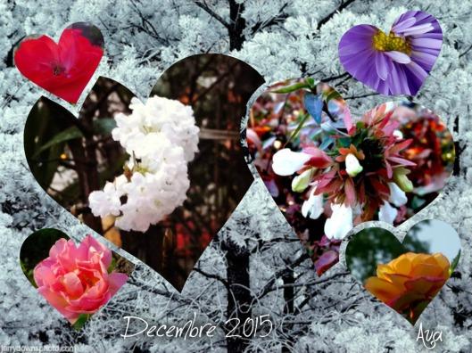 flower power 2015 novembre