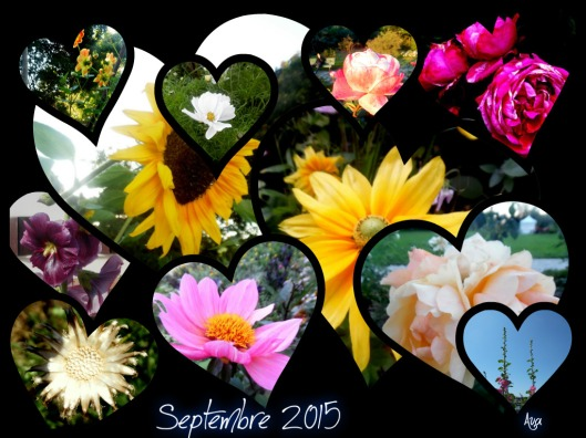 flower power 2015 septembre 2015