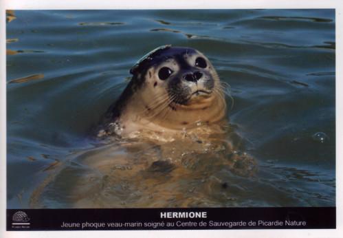 hermione-03-10-2011-11-00-45