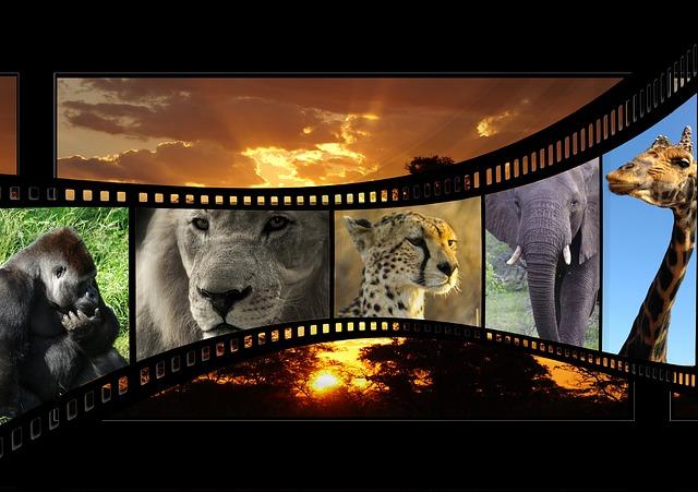 movie-596154_640