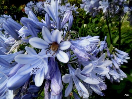 abeille audacieuse