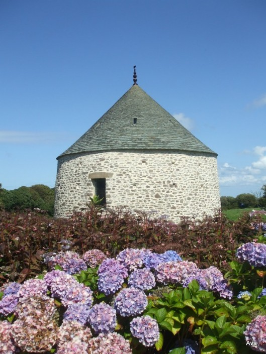 hortensias du Cotentin