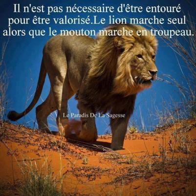 le_lion_marche_seul