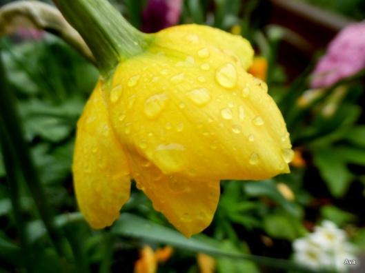 flower rainy day