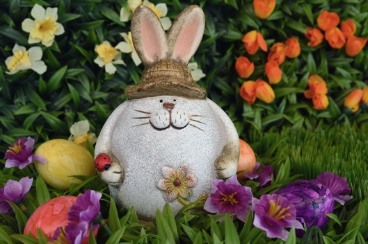 hare-1162971_960_720