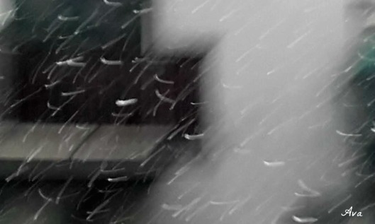 neige du jour