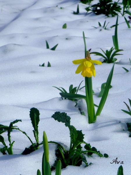 neige le 14 mars 2013