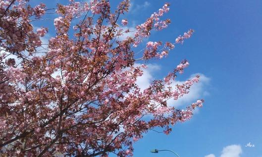 arbres de printemps