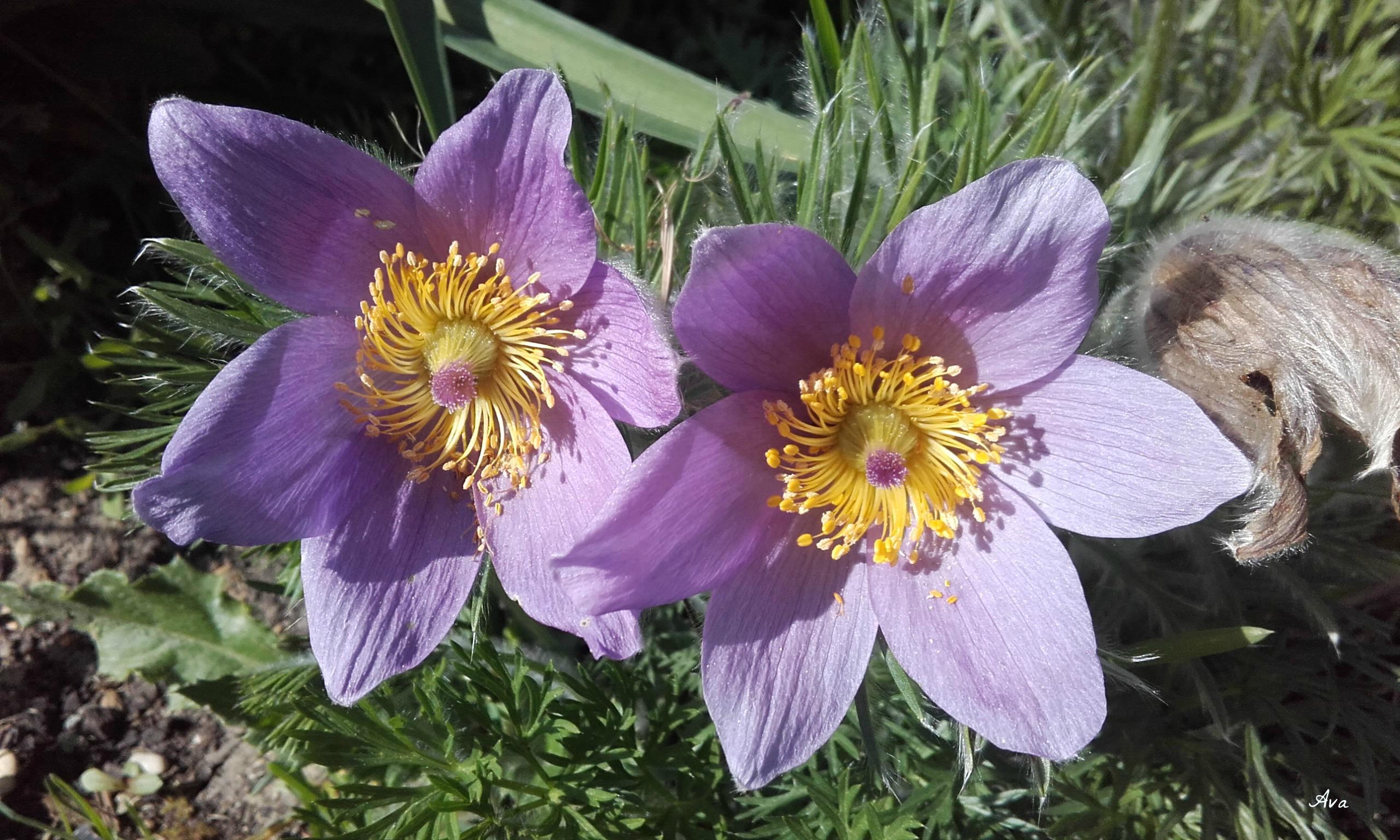 fleurs au soleil