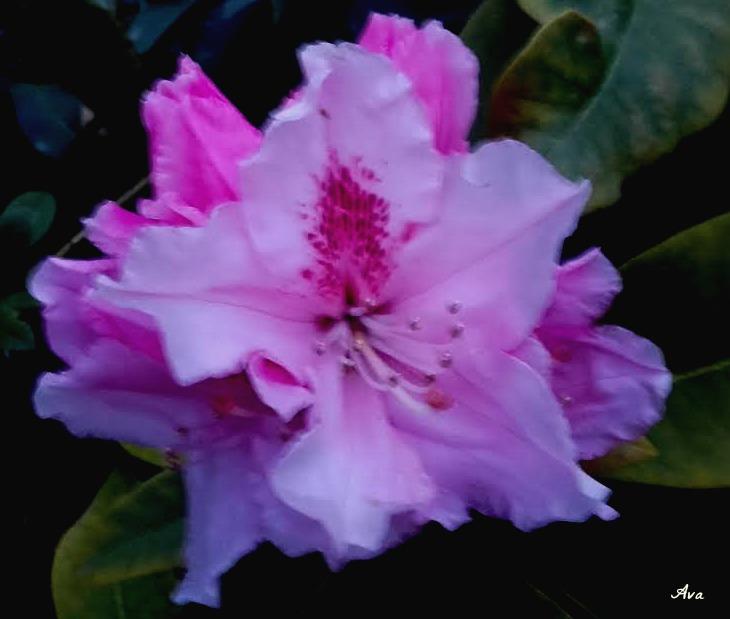 fleur rose lundi soleil