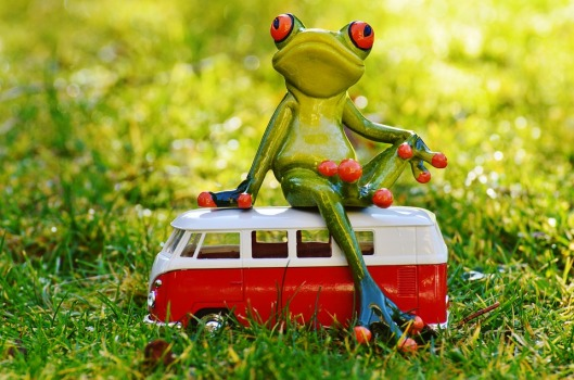 frog-1109777_960_720