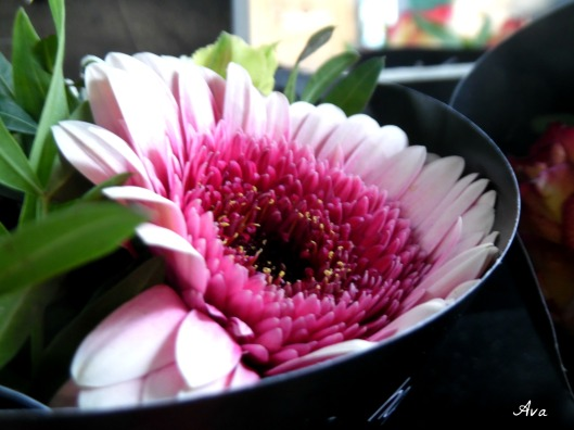 Lundi Soleil fleur rose