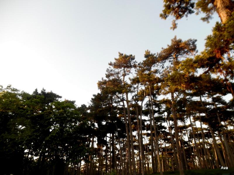 SAM_8896