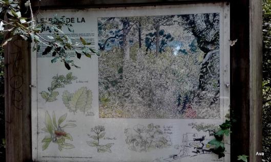 panneau information sur les arbres noirmoutier