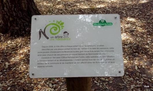 un arbre, une naissance, Noirmoutier