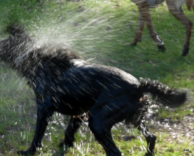 fun, dog