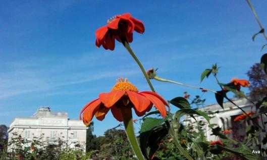 fleurs oranges et pavillons