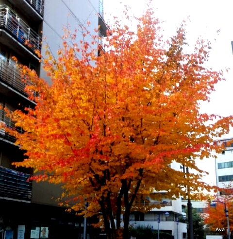 arbre-orange-en-octobre