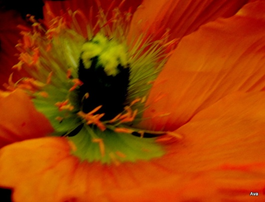 coeur orange