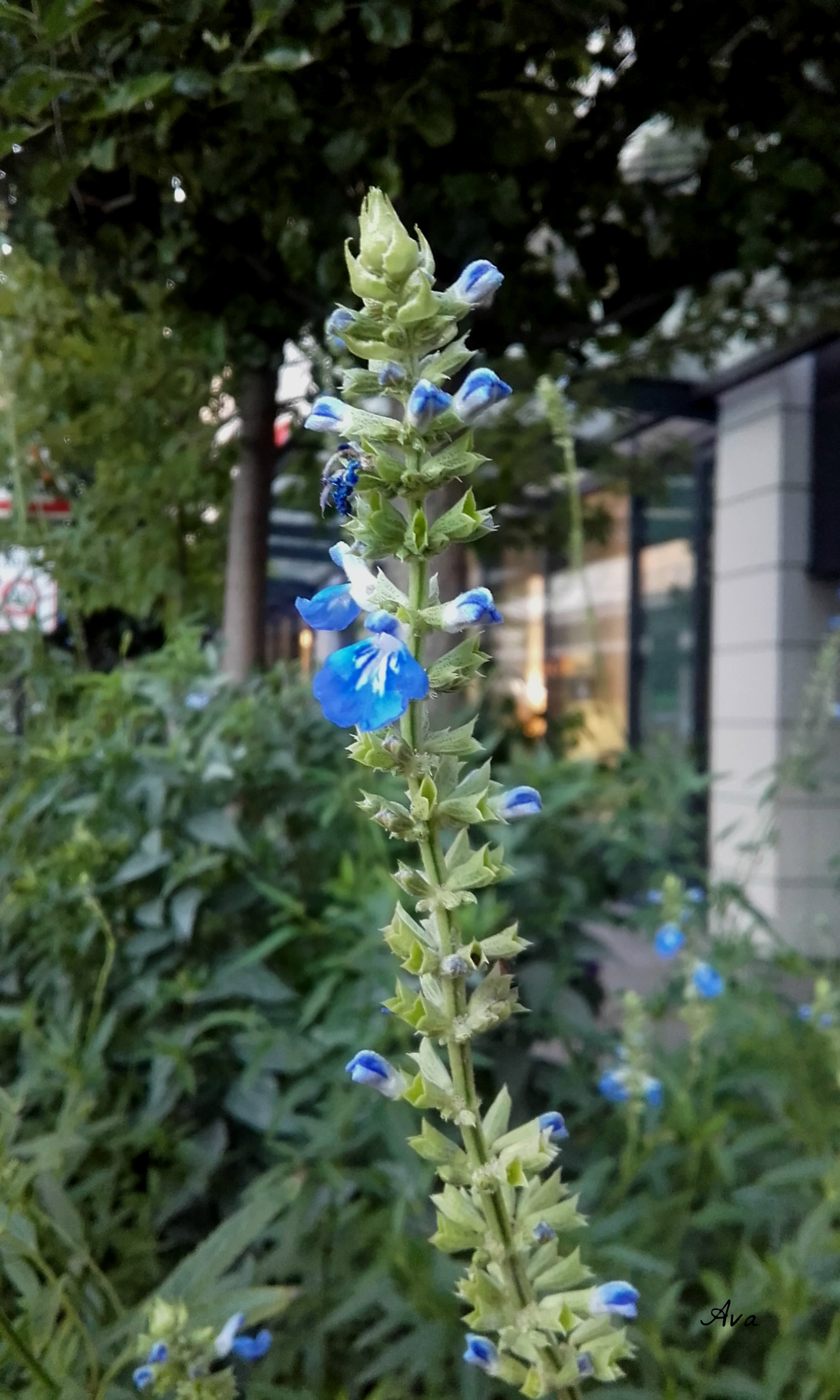 fleur-bleue-a-levallois-perret