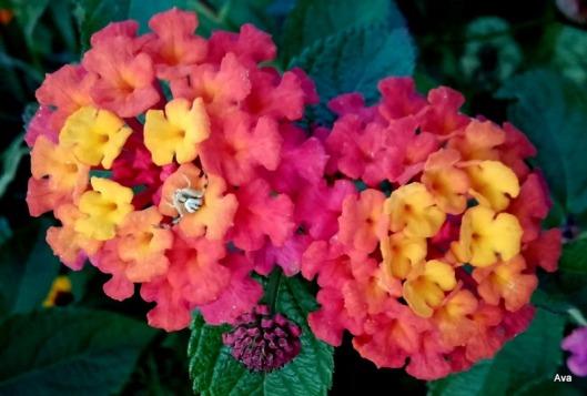 fleurs-camaieu-rose-jaune-orange