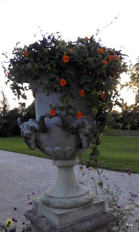 orange-dans-de-beaux-pots