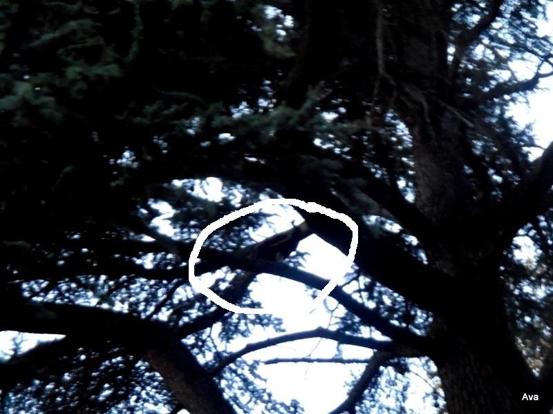 paon-dans-les-arbres