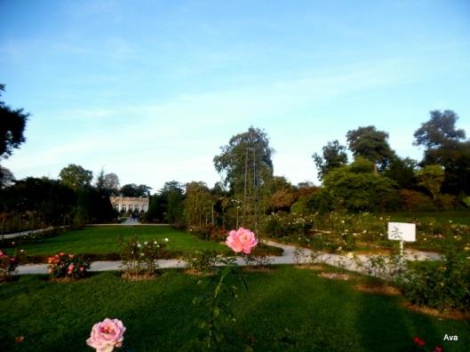 roseraie-parc-de-bagatelle-fete-des-jardins-2016