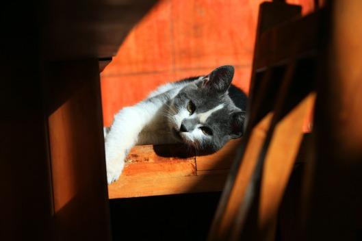 cat-56753_1920