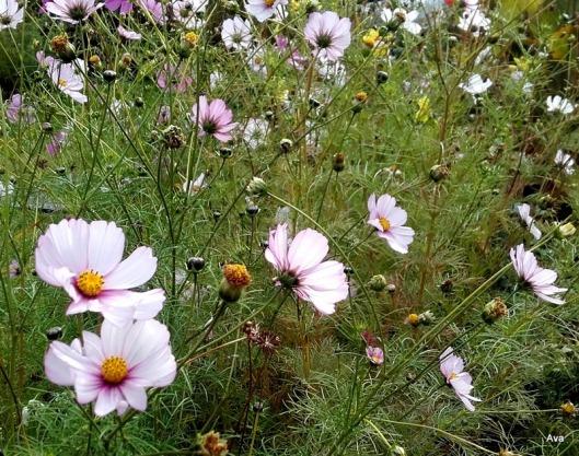 fleurs-champetres