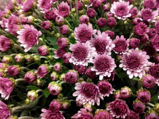 fleurs-de-saison