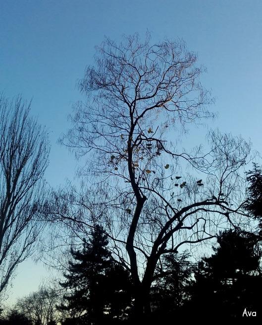 arbres-du-jour
