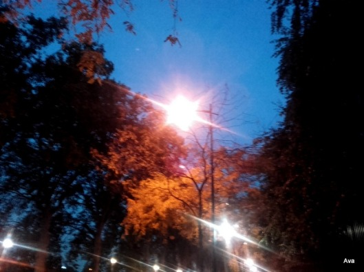 feuillages-bruns-des-arbres-en-automne