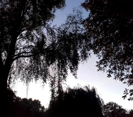 les-ombres-des-arbres-dans-la-nuit