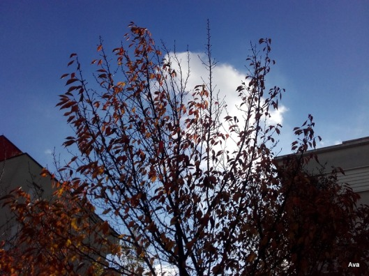 nuages-pris-dans-les-arbres