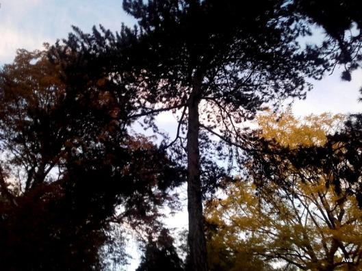 soleil-dans-les-arbres