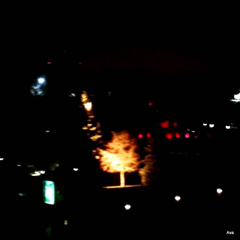 un-arbre-dans-la-nuit