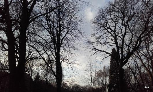 coucher-de-soleil-sur-le-parc