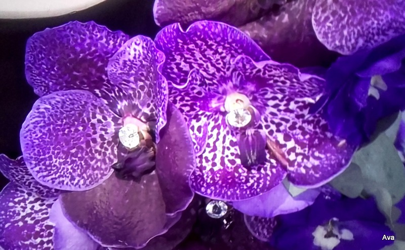orchidees-violet-2