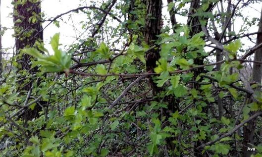 feuilles-vertes-dans-les-arbres