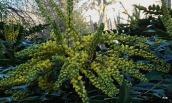 plantes de printemps