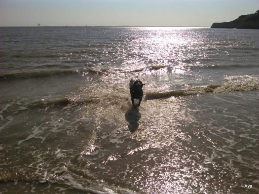 chien dans la mer