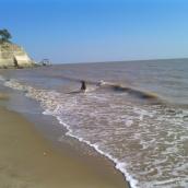 chien qui court sur la plage
